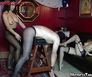 برده نر رو به رو دو پا نشسته است